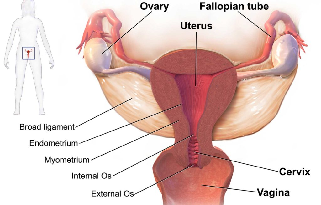 Amenorrhea (Absence of Period)